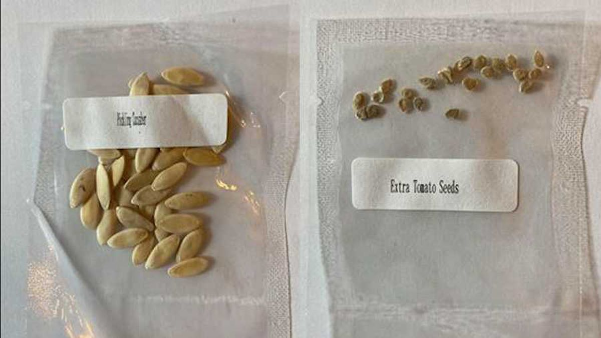 """The seeds are usually sent in white packages displaying Chinese lettering and the words """"China Post."""""""
