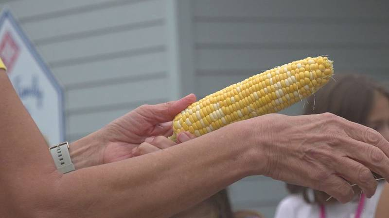 Girls at Girls Inc. Youth and Family Services learn how to husk corn