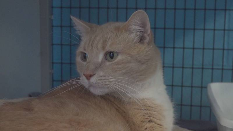 Muschi is a seven-year-old short-haired cat with lots of love to give.