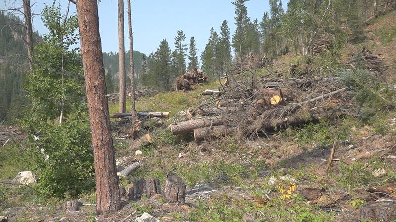 The Black Hills National Forest has a number of agencies working to protect it and it's natural...