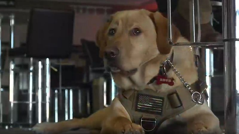 Man's best friend is now a veteran's perfect supporter. Rush, the puppy, is more than a lovable...