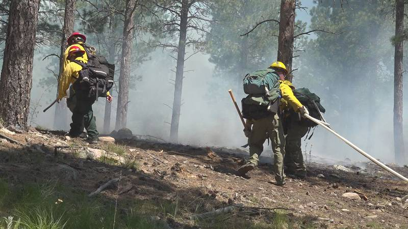SD Wildland Fire hosting training exercises in Custer State Park.