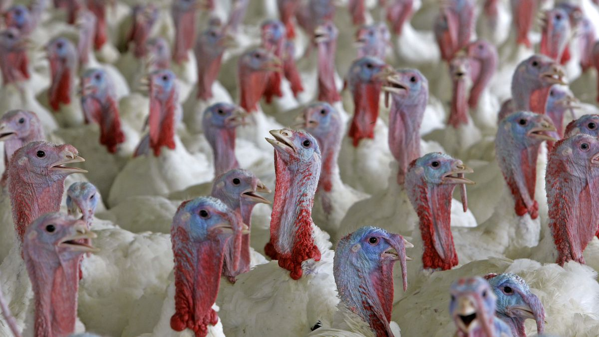 China is lifting its ban on U.S. poultry imports. (Source: AP Photo/Gerry Broome, File)