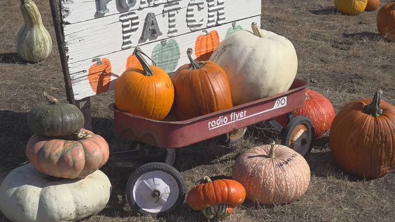Carroll Acres Hobby Farm hosted their first annual pumpkin patch and fall festival this weekend.