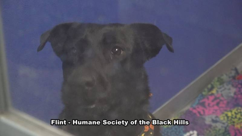Black cats and dogs tend to be the last animals adopted out of shelters