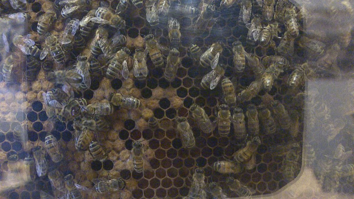A Buzz in the Black Hills, a two-day event that is all things bees will be held Sept. 14-15.