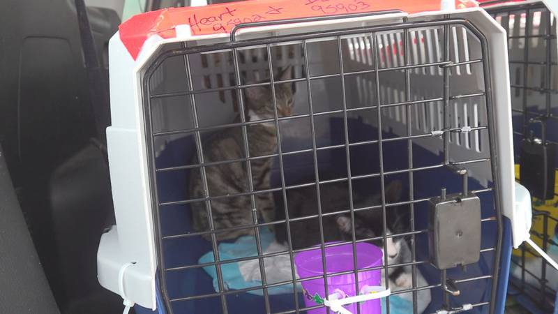 A program called Good Flights conducted emergency evacuations of several cats and dogs that...