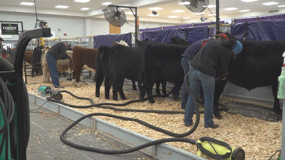 Several youth stock shows across the nation were cancelled due to the COVID-19 pandemic.