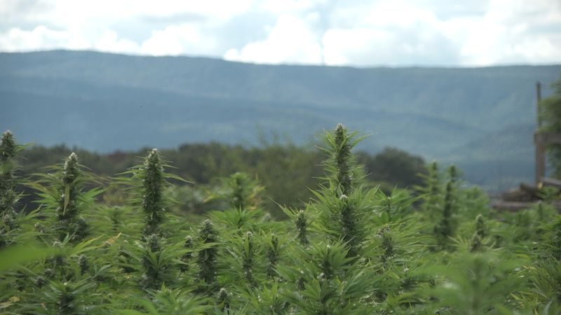 In August, the South Dakota Department of Agriculture (SDDA) submitted its final hemp plan to...