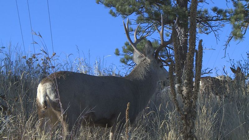 A deer that was spotted on Skyline Drive.