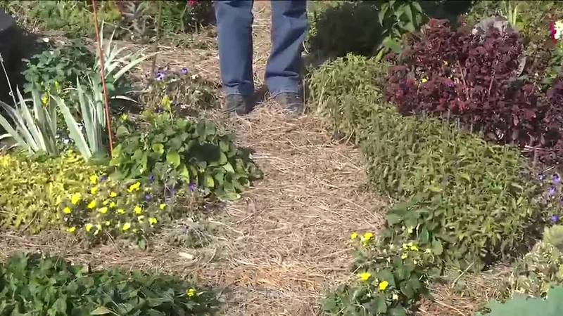 With herbicides seeping it's way into many varieties of mulch garden aficionado, Cathie Draine,...