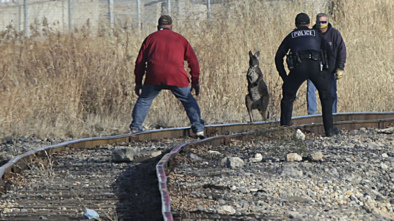 Peru Police officers and other volunteers help corner Wally the Wallaroo on the train tracks...