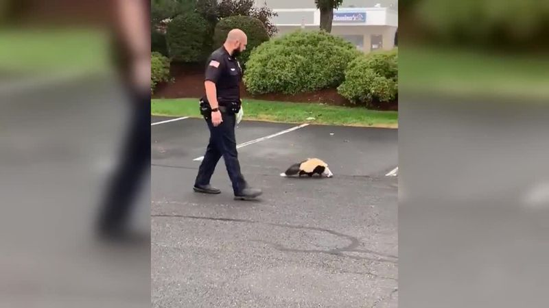 Just a typical day on the job for this Tewksbury officer.