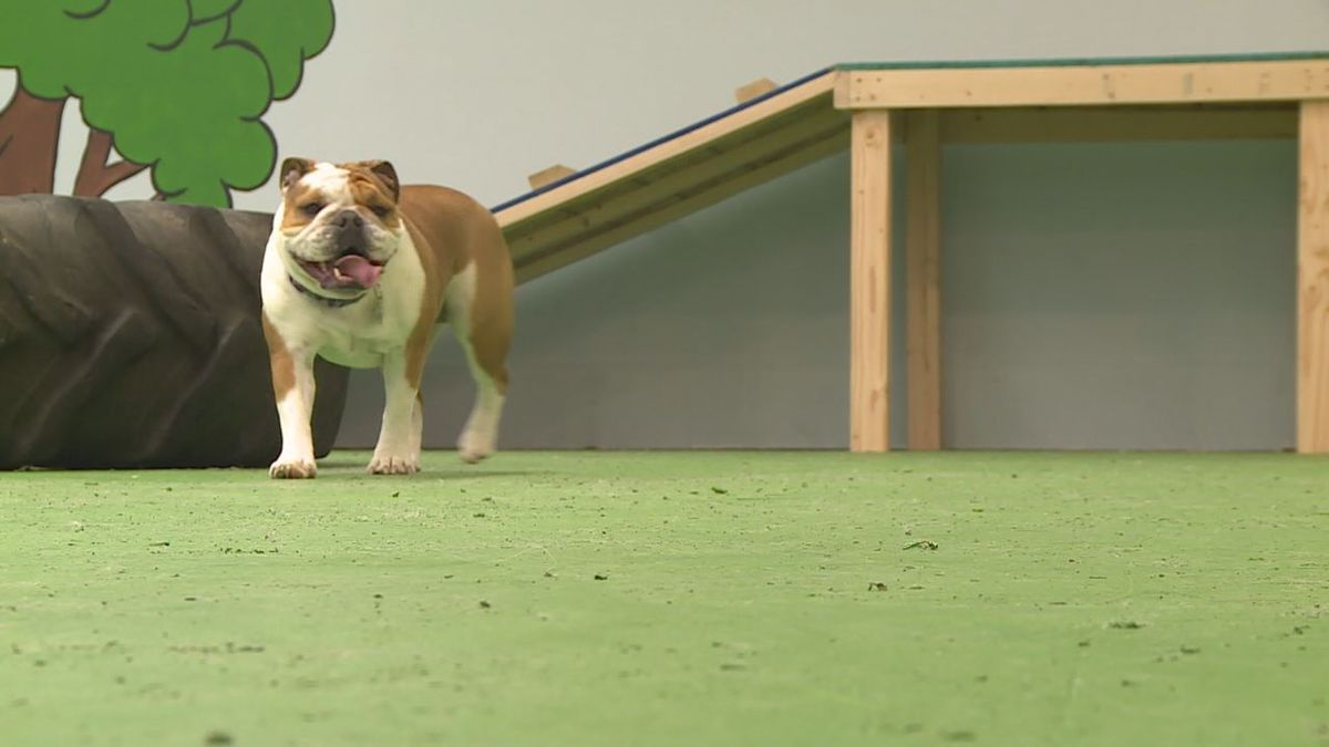 New dog park opens at the Mall (KEVN)