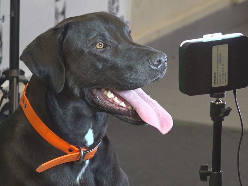The Bar K-9 has many dogs getting ready for a photo.