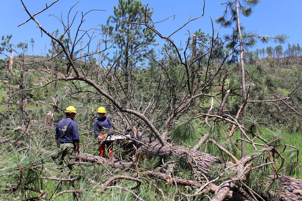 Forest Service officials continue to evaluate the impacts of a tornado that touched down on the Forest in the Northern Black Hills of Wyoming and South Dakota.
