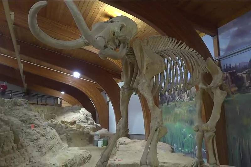 Scientist are working to bring back the woolly mammoth