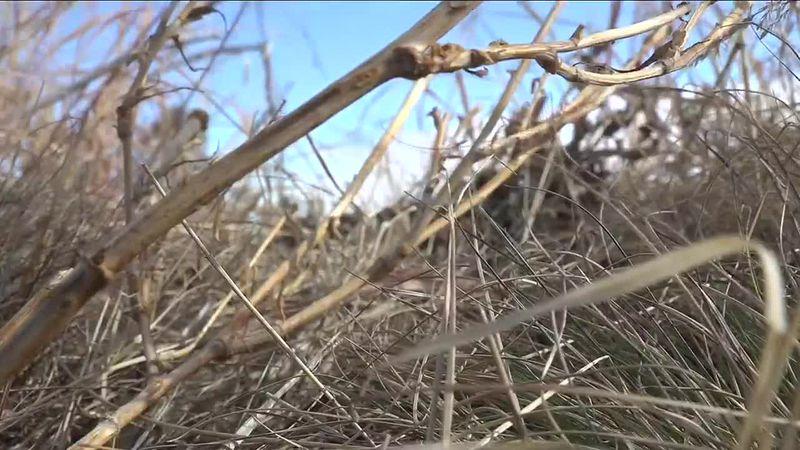 Shots of the dead grasses across South Dakota.