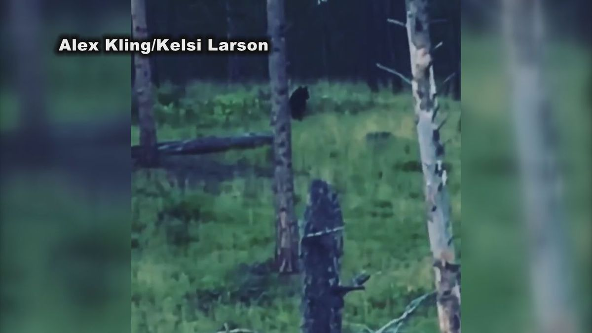 Bear spotted north of Pactola