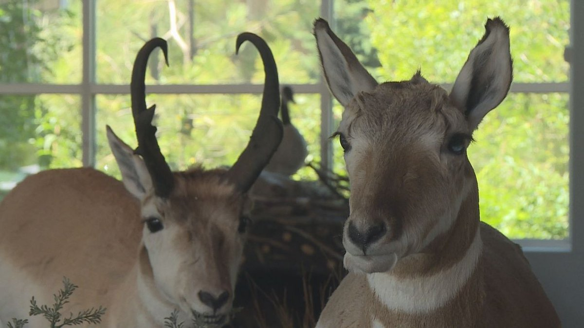 Displayed animals at Outdoor Campus West. (KOTA TV)
